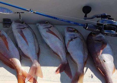 galery fishing_0005_IMG_3256